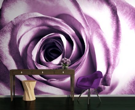 Purple rose flower wall mural